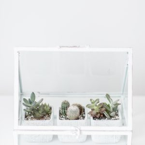 Living Fresh - White Greenhouse