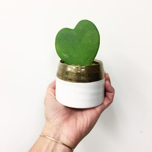 Living Fresh - Plants Heart Hoya Valentine's Day