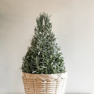Living Fresh - Holiday Lavender Tree