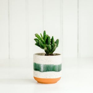 Mini Succulent in Green Striped Pot