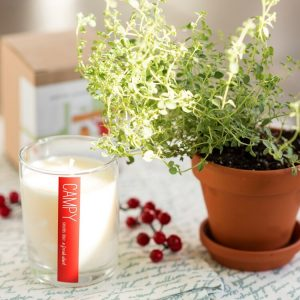 Living Fresh - A Fresh Start - Campy Candle