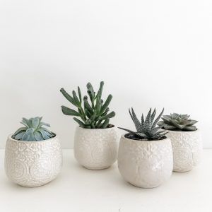 Living Fresh - Mini Plant Subscription
