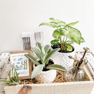 Living Fresh - Plant Lover's Gift Box