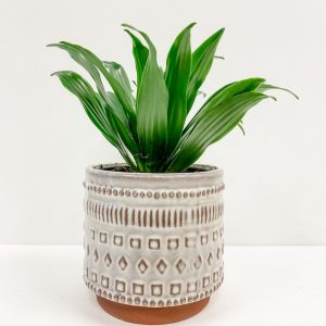 Living Fresh Flower and Plant Studio - Tropical Plant in Freja Pot