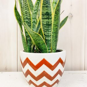 Living Fresh Flower and Plant Studio - Rusty Chevron with Snake Plant