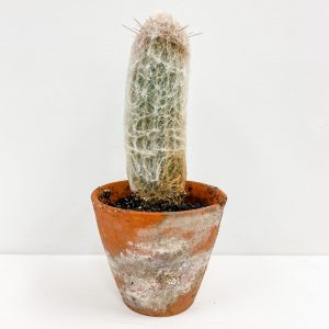 Living Fresh Flower and Plant Studio - Cactus in Terra Cotta
