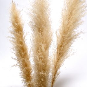 Living Fresh Flower and Plant Studio - Natural Pampas Grass