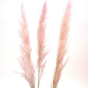 Living Fresh Flower and Plant Studio - Natural Pampas Grass Blush