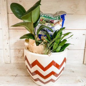 Living Fresh Flowers and Plant Studio - Plant Enthusiast Gift Planter - Tropical