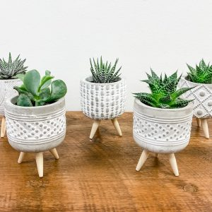 Living Fresh Flower and Plant Studio - Succulents in Concrete Footed Pots