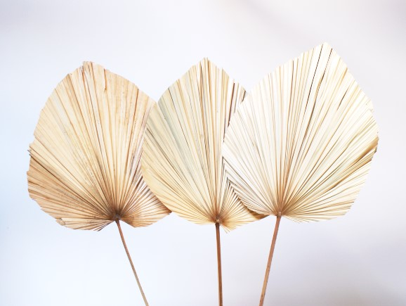Living Fresh Flower and Plant Studio - Anahaw Palm Leaves