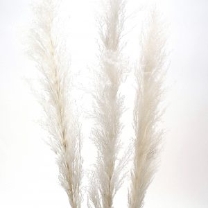 Living Fresh Flower and Plant Studio - Natural Pampas Grass White