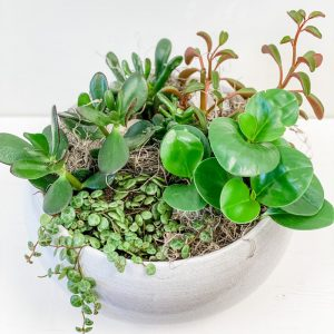 Living Fresh Flower and Plant Studio - Peperomia Garden Bowl
